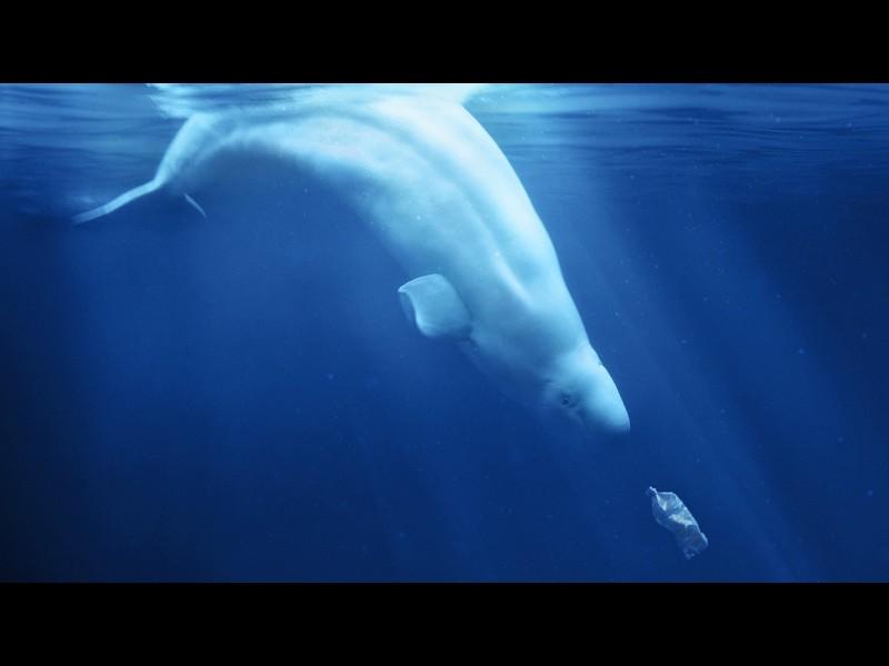dOCs+ A PLASTIC OCEAN