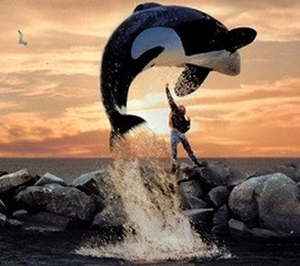 Free Willy thumbnail image