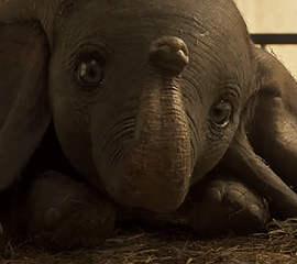 Parent & Baby: Dumbo 2D