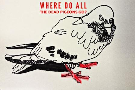 Where Do All The Dead Pigeons Go?