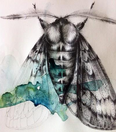 Moth & Ink
