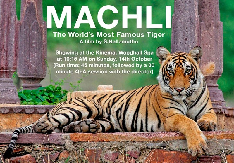 Machli - The World's Most Famous Tiger
