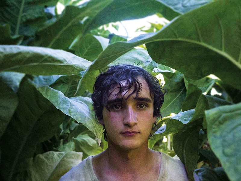 The Spotlight Alternative // Happy as Lazzaro