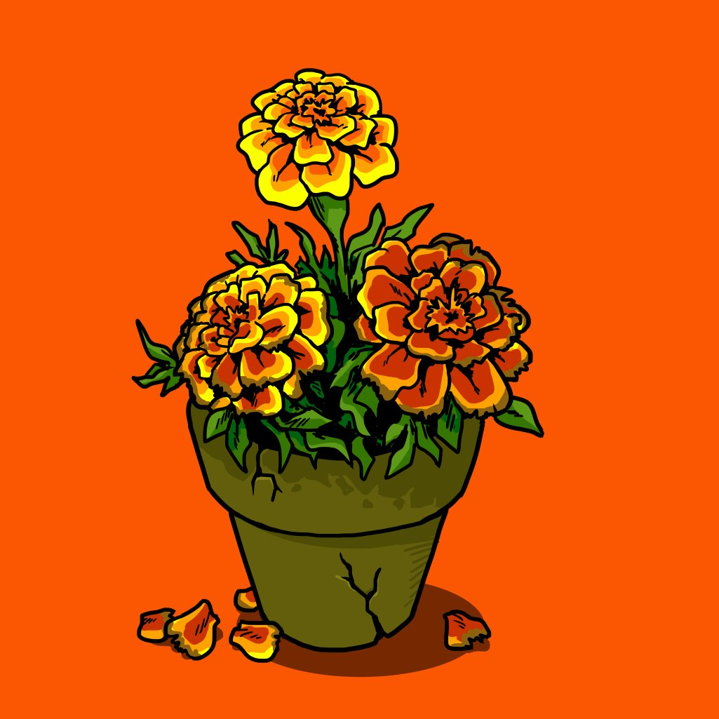 The Effect of Gamma Rays on the Man-in-the-Moon Marigolds