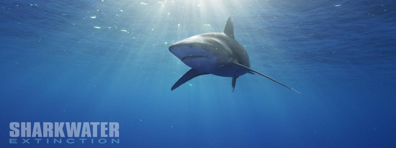 SHARKWATER : EXTINCTION