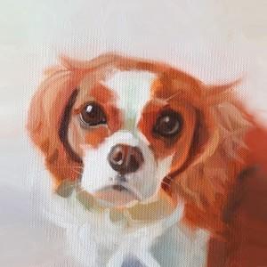 Animal Portraits - Beginners Improvers