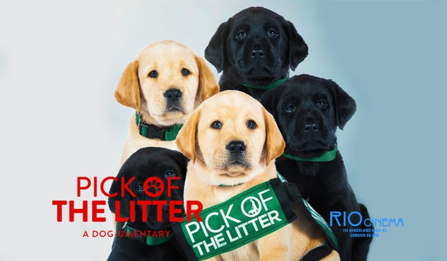PICK OF THE LITTER P&B