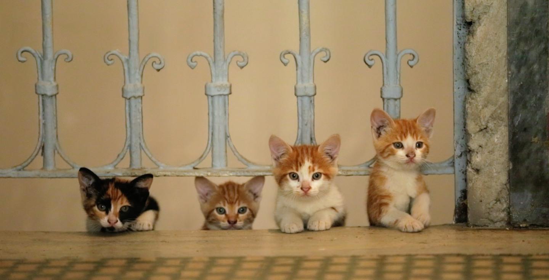 Kedi image