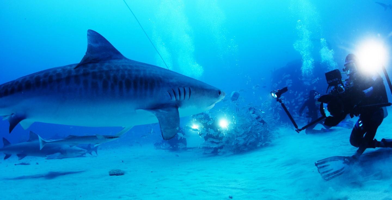 Sharkwater Extinction image