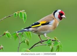 3D Goldfinch Sculptures