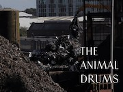 The Animal Drums